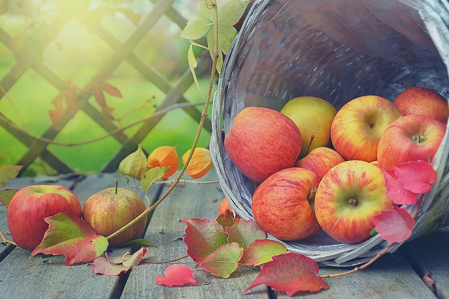 Annual Food Agenda: proyecto para mejorar la toma de decisiones nutricionales