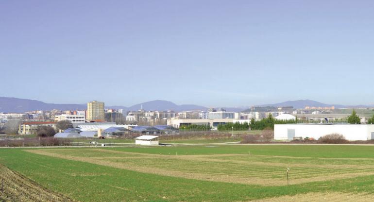 Investigación para encontrar trigos resistentes a la roya y la sequía