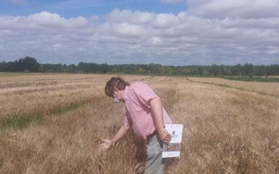 Sostenibilidad, rentabilidad y eficiencia en el cultivo de trigo duro