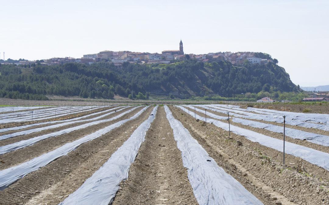 Bienvenida oficial al Espárrago de Navarra