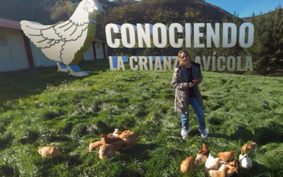 La crianza avícola en 360º
