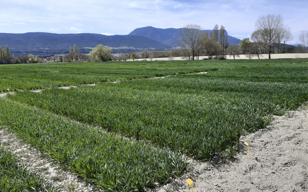 La cooperativa socia del Grupo AN Santa Orosia de Jaca-Sabiñánigo, pionera en la producción de avena para consumo humano