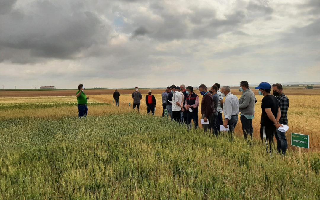 Jornadas para dar a conocer la semilla certificada de Villamartín de Campos