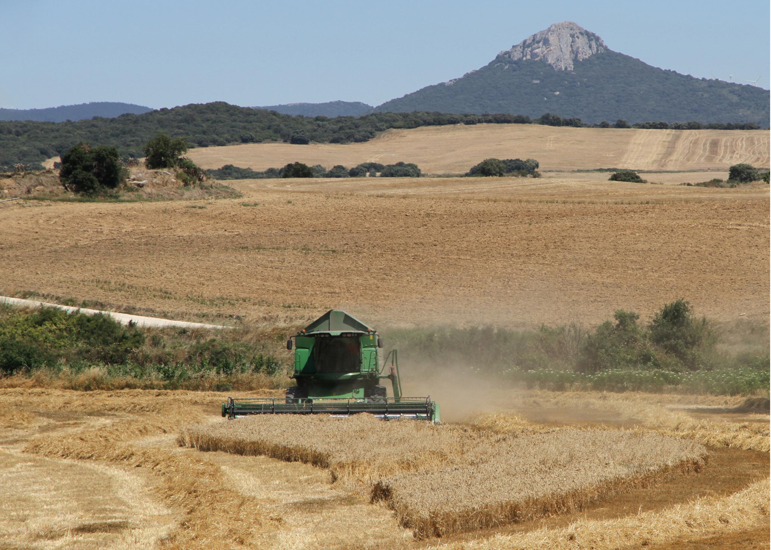 Cosecha de cereal en España