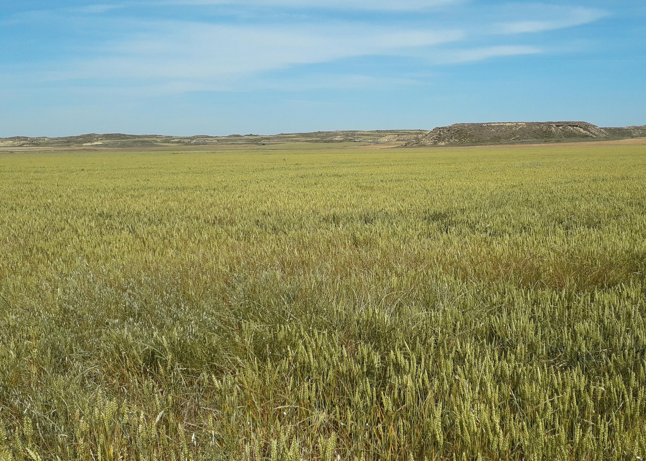 Campo de uno de los agricultores que forman parte del Compromiso Harmony